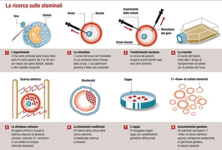 Le cellule staminali: scienza e ricerca