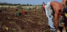 Mannino: La UIL è favorevole ad un'azione coordinata per la lotta alla tratta degli individui