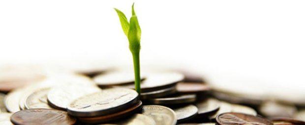 soldi_pianta
